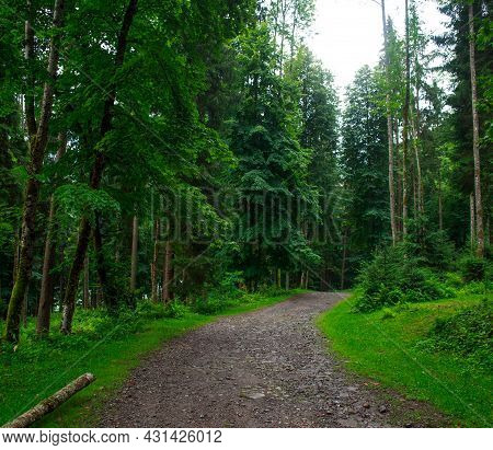 Landscape Of Coniferous And Deciduous Green Forest, Tourism And Pure Nature Of The Ukrainian Carpath