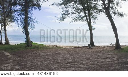 Camera Moves In Rainforest Through Trees. Wild Beach On Tropical Island Oahu. Early Morning At Hawai