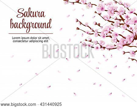 Sakura Branch Background. Cherry Blossom, Japan Tree Floral Branches. Japanese Flowers Blooming Fest