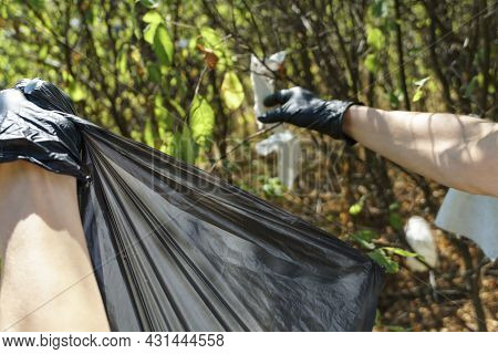 Volunteer Woman Collects Trash In The Trash Bag. Trash-free Planet Concept. Nature Cleaning, Volunte