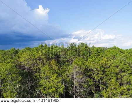 Aerial View Forest Tree Environment Forest Nature Blue Sky Background, Texture Of Green Tree Top Vie