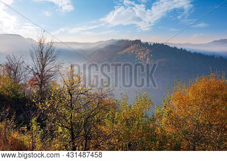 Autumnal Scenery With Fog In The Valley At Sunrise. Mountain Landscape In Morning Light. Trees In Co