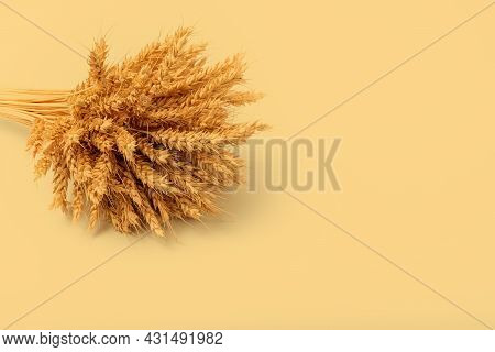 Beautiful Sheaf Of Rye On Yellow Background. Harvesting Concept. Copy Space
