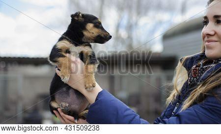 Portrait Of A Black Puppy. Woman Holding The Animal In Her Arms. Young Black Dog Close-up. Charming