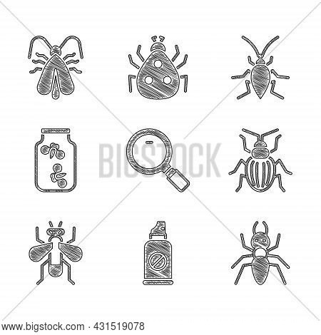 Set Magnifying Glass, Spray Against Insects, Ant, Chafer Beetle, Insect Fly, Fireflies Bugs Jar, Coc