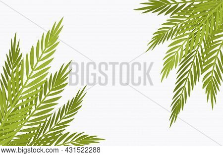 Palm Tree Corner Background, Copyspace For Tropical Themed Decor. Green Tropical Leaves, Jungle Hawa