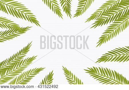 Palm Tree Background, Copyspace For Tropical Themed Card Decor. Green Tropical Leaves, Jungle Hawaii