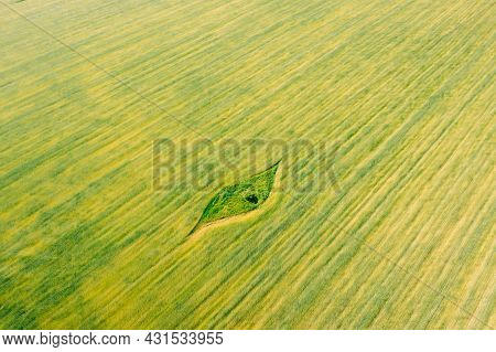 Aerial View Of Small Green Natural Island With Green Grass In Summer Field, Summer Meadow. Beautiful