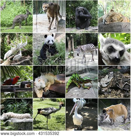 Collage Of Pictures Of Different Beautiful Animals