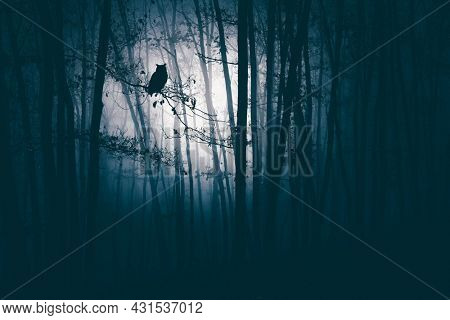 Enchanted forest in magic, mysterious fog at night.
