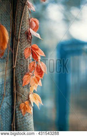 Autumn Orange Leaves, Autumn Nature Background With Indian Summer Bokeh. Beautiful Autumn Landscape