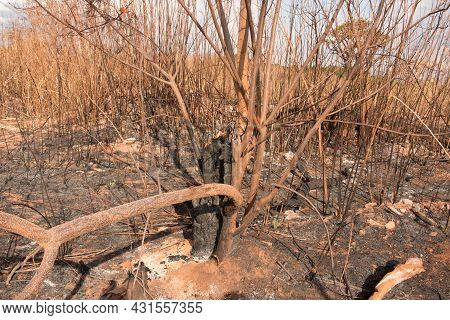 The Remains Of A Brush Fire At An Illegal Trash Dump In Granja Do Torto, North Of Brasilia, Brazil