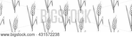 Wheat Spikelets, Vector Seamless Pattern. Outline Drawn In Sketch Style Isolated. Design Of Print, W