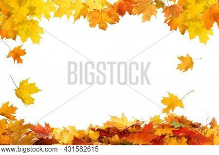 Beautiful yellow,red,orange foliage. Natural background. Border frame of colorful  leaves. Vibrant fall colors.Autumn falling leaves isolated on white background.