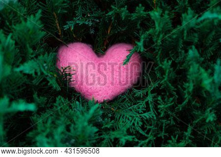 Pink Woolen Heart On The Juniper Or Tuya Branches