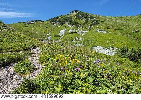 Flowering Meadow, Monkova Valley, Belianske Tatras Mountain, Slovak Republic. Seasonal Natural Scene