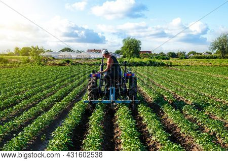 Beautiful Landscape Of Potato Plantation And A Cultivator Tractor. Field Work Cultivation. Farm Mach
