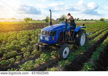 A Farmer Is Cultivating A Potato Plantation. Young Potatoes Bushes. Farm Machinery. Crop Care, Soil