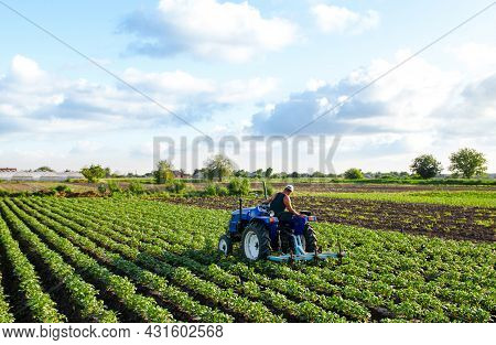 Farmer On A Tractor Cultivates A Potato Plantation. Agroindustry And Agribusiness. Farm Machinery. P