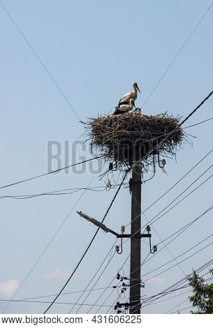 Large Migratory Bird With Black And White Plumage. White Stork And Nestling On Cloudy Sky. Stork Fam