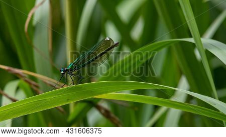 Dragonfly On A Plant Close Up Sits On A Green