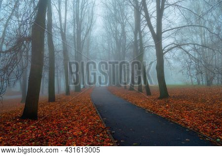 Autumn landscape, misty autumn view of autumn park alley in dense fog, foggy autumn landscape. bare autumn trees along the foggy autumn alley. Autumn park, autumn landscape, autumn trees in foggy autumn weather