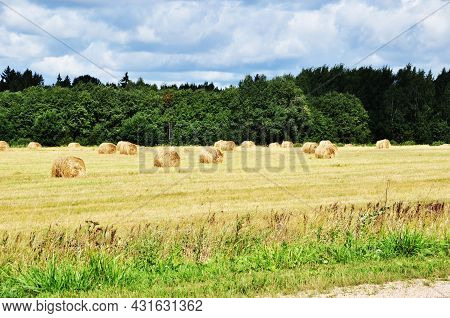 Panoramic View Of A Field With Mowed Grass. Autumn . Swaths Of Cut Grass In The Field.