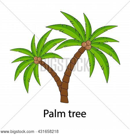 Palm Tree Vector, With The Inscription Palm Tree. Palm Tree With Coconuts Isolated On A White Backgr