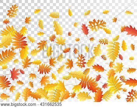 Oak, Maple, Wild Ash Rowan Leaves Vector, Autumn Foliage On Transparent Background.