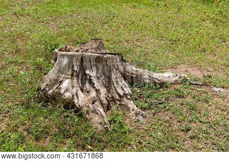 Dry Tree Stump In  The Meadow - Image With Copy Space,  Dead Tree.