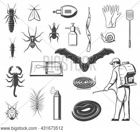 House Pests Control, Insects And Animals Vector Icons. Termite, Silverfish And Moth, Spider, Weevil