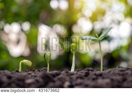 Sapling Growing On Soil And Green Nature Bokeh Background. Plant Growth Progression Concept. Ecology