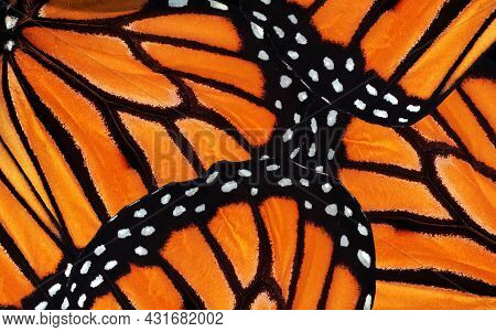 Monarch Butterfly Wings. Abstract Pattern Of Tropical Monarch Butterfly Wings. Natural Orange Backgr