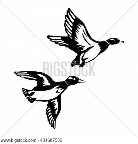 Two Ducks Are Flying On Hunting. A Set Of Black Monochrome Ducks. Vector Illustration Isolated On Wh