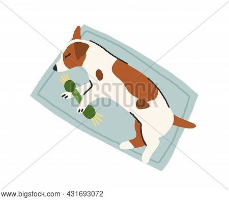 Small Dog Sleeping On Rug With Toy In Paws. Cute Jack Russell Terrier Puppy Lying On Floor And Nappi