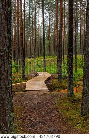 Vertical Photo Of Wooden Walking Path Trail In Pine Tree Forest. Footpath In The Woods Near Trenches