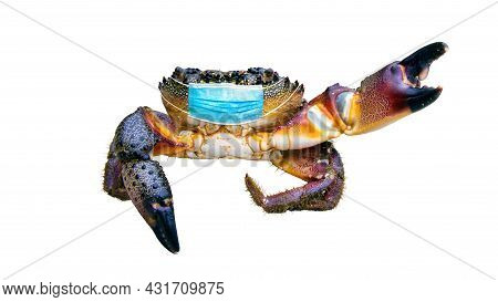 Doctor Crab. Large Crab In A Medical Mask Isolated On White, Concept Of Protection Against Covid 19