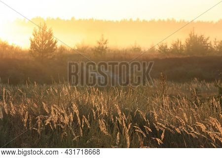early morning landscape in steppe. Mist over meadow.