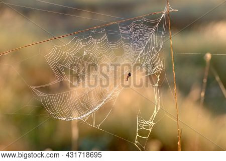 spider on web in morning summer meadow