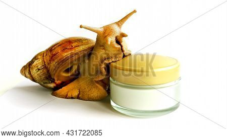 Snail And Jar Of Skin Cream On White Isolated Background. Selective Focus. Snail Mucus. Beauty Clini