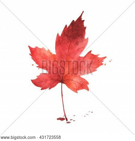 Watercolor Autumn Leaf. Maple Leaf Watercolor Hand-painted Isolated On White Background. Illustratio