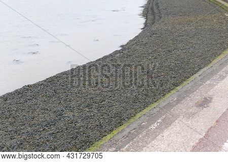 Waterway With Promenade Covered In Seaweed And Dull Sea Beyond