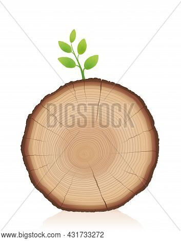 Tree Trunk With Green Sprout - Wood Slice With Young Sprig - Symbol For Comeback, Restart, Relaunch,