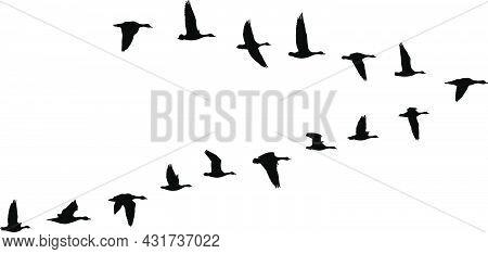 V Formation Of Birds, Gooses Flock - Vector Illustration