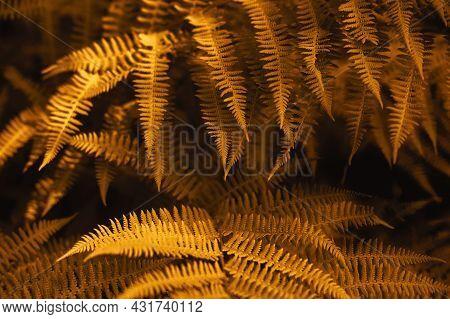 Autumn Ferns Leaves Background. Golden Foliage Natural Floral Pattern. Selective Focus