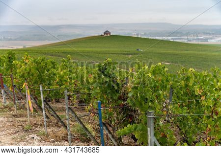Landscape With Green Grand Cru Vineyards Near Epernay, Region Champagne, France In Rainy Day. Cultiv