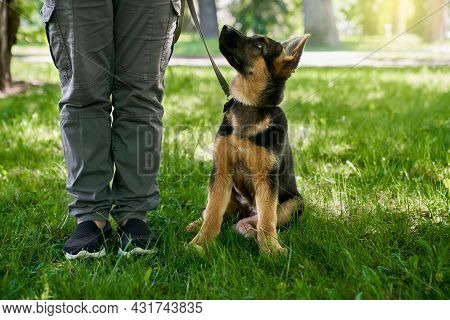 Black And Brown Little Puppy Sitting Near Owner Legs At Summer Park. Purebred Dog Walking On Leash O