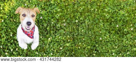 Cute Happy Obedient Dog Puppy Begging, Listening In The Grass, Pet Training Banner