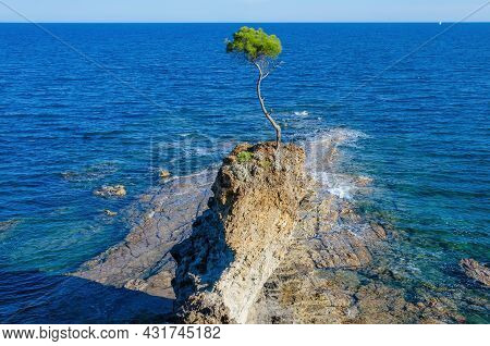 Lonely Pine Tree On The Rocky Shore Of The Blue Sea On A Cliff On A Sunny Day. The Concept Of The Po