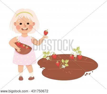 Little Blond Girl In Her Childhood Picking Strawberries From Garden Bed Vector Illustration